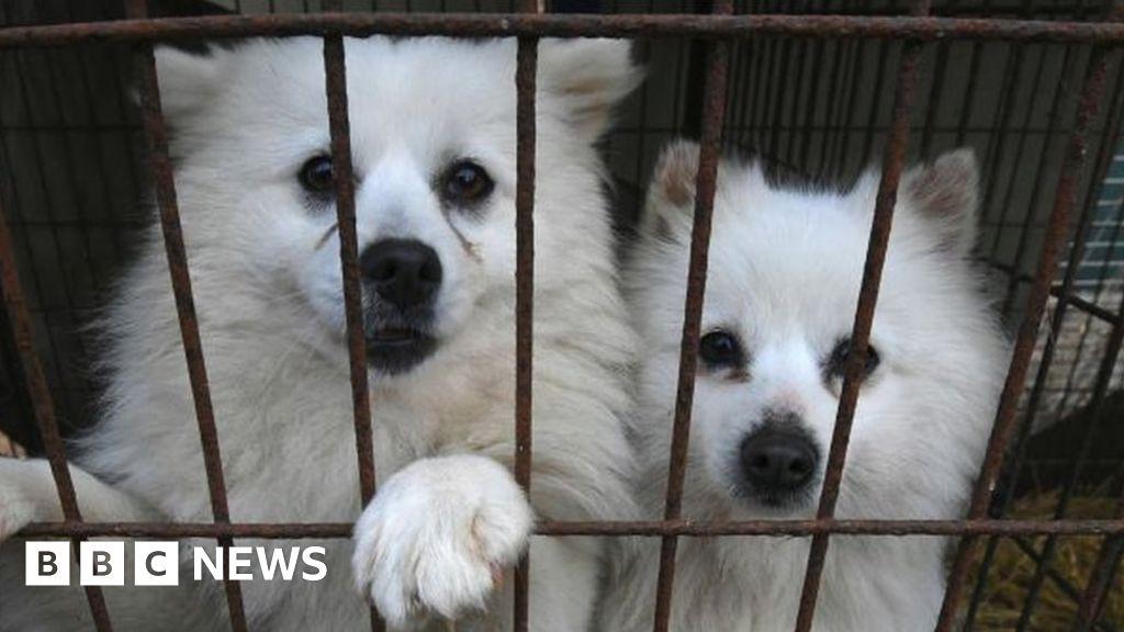 South Korea's president mulls dog meat ban as consumption dwindles