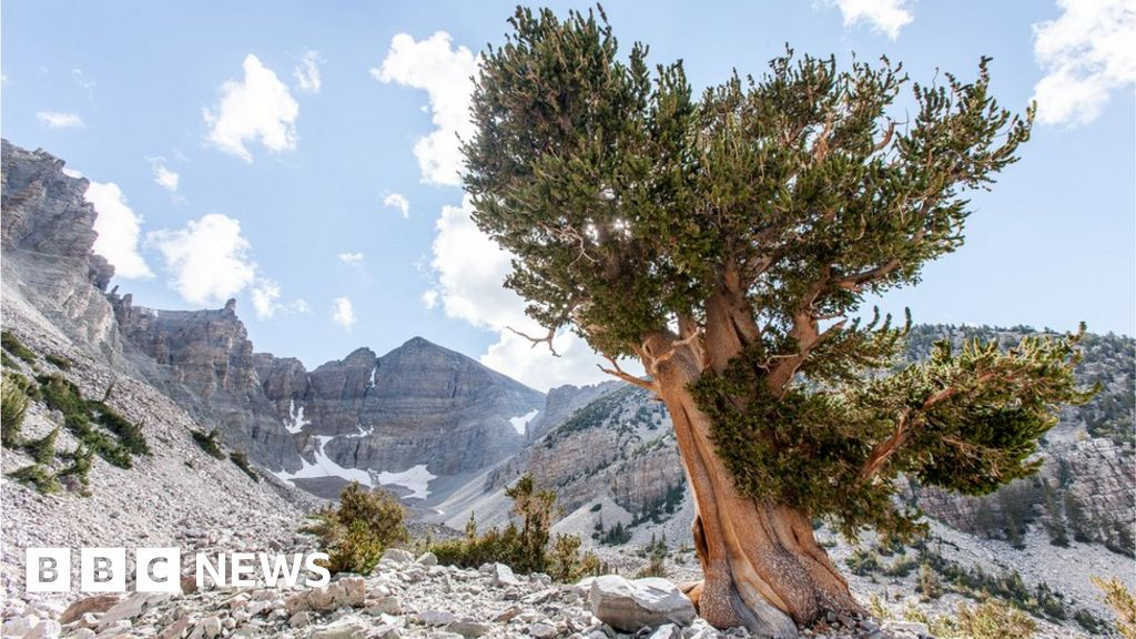 The Oldest Living Thing On Earth Bbc News