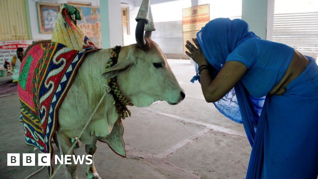 Why the humble cow is India's most polarising animal - BBC News