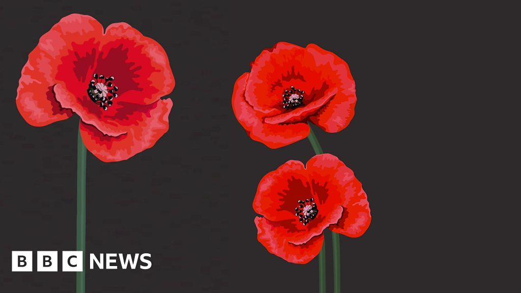 Red White Purple Black Choosing A Remembrance Day Poppy Bbc News