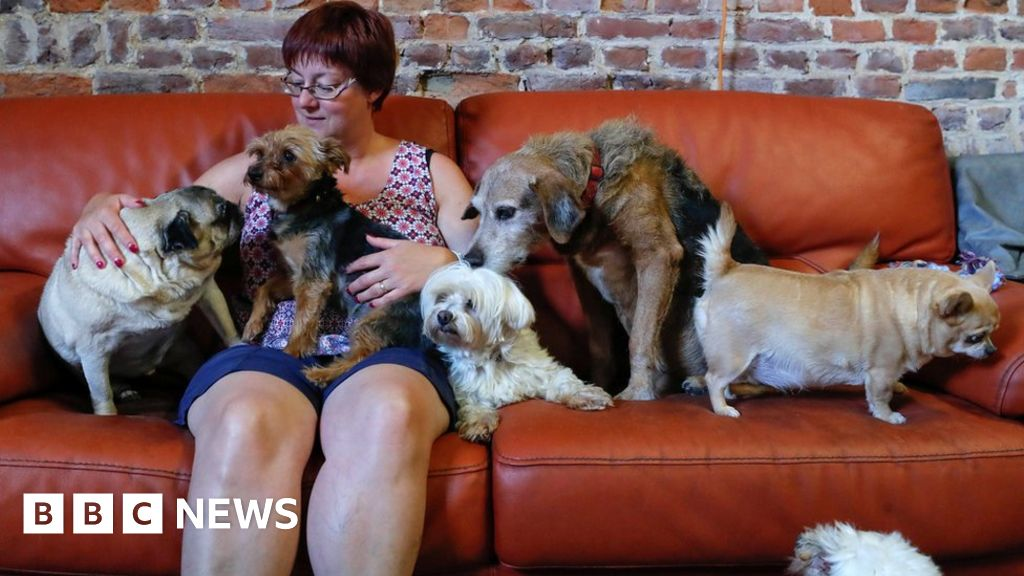 Belgium's retirement home for elderly animals