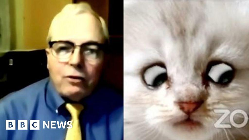 Cat Zoom