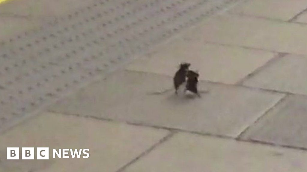 Dancing  mouse spotted quiet Tube platform