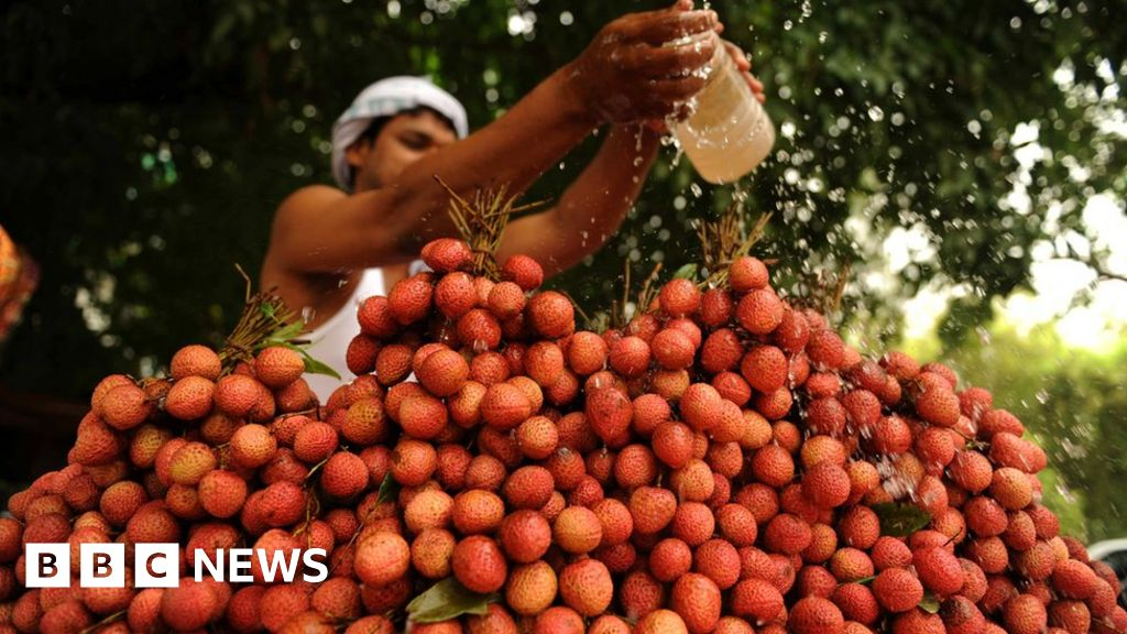 Indian children died after 'eating lychees on empty stomach
