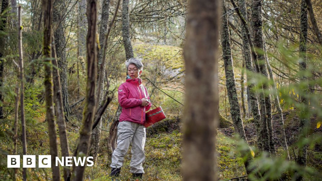 Mushroom foraging saved me from my grief