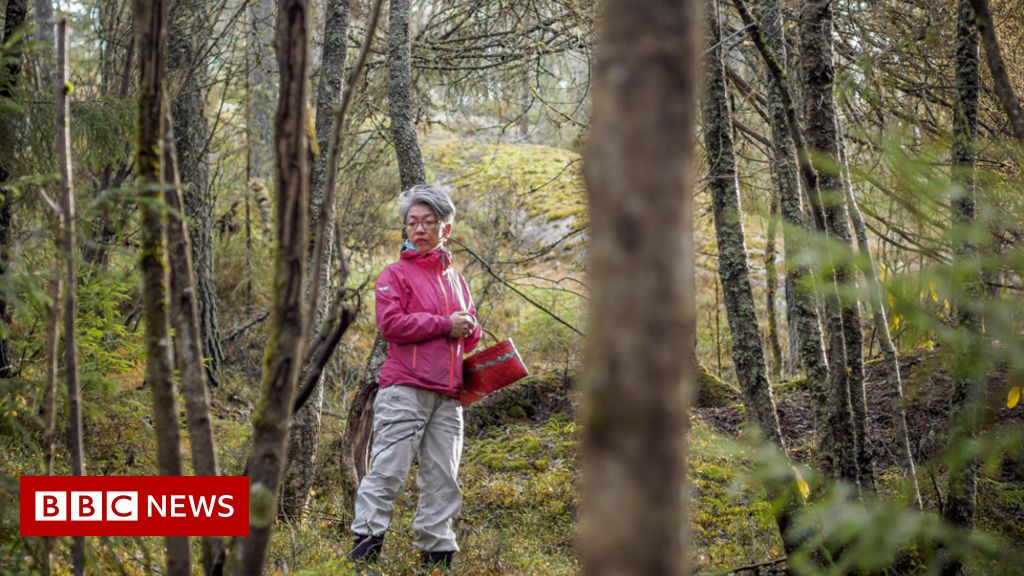 'Mushroom foraging saved me from my grief'