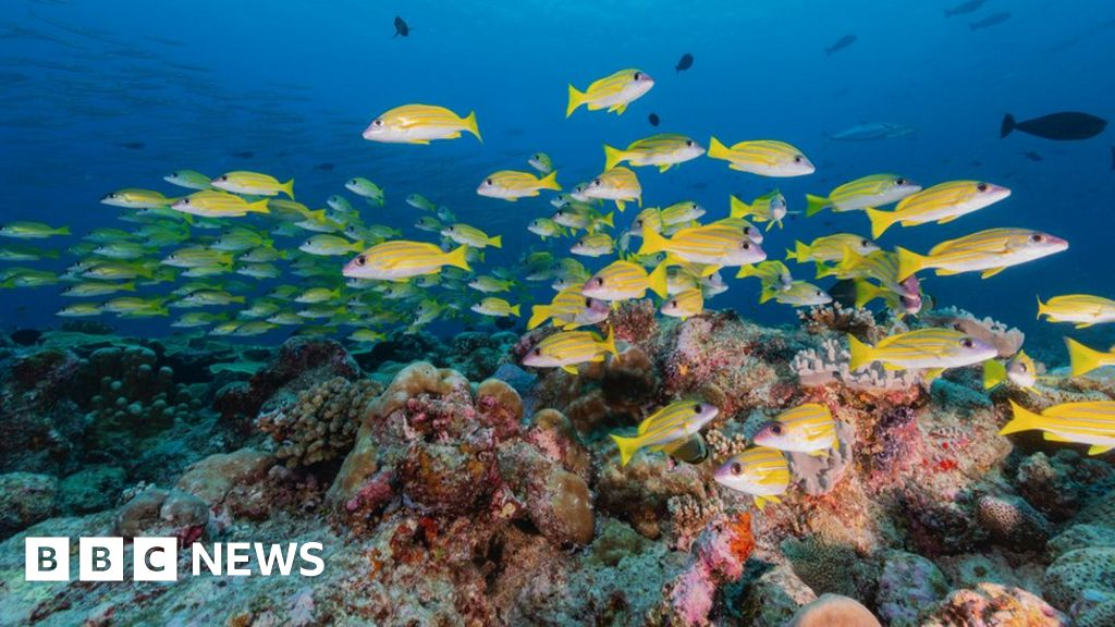 Ocean noise: Study to measure the oceans' 'year of quiet'