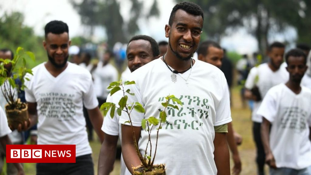 Deforestation: Did Ethiopia plant 350 million trees in a day?
