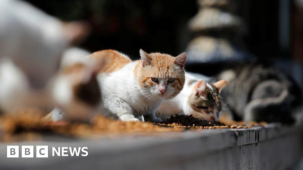 Pets in the Middle East gave up on coronavirus fears