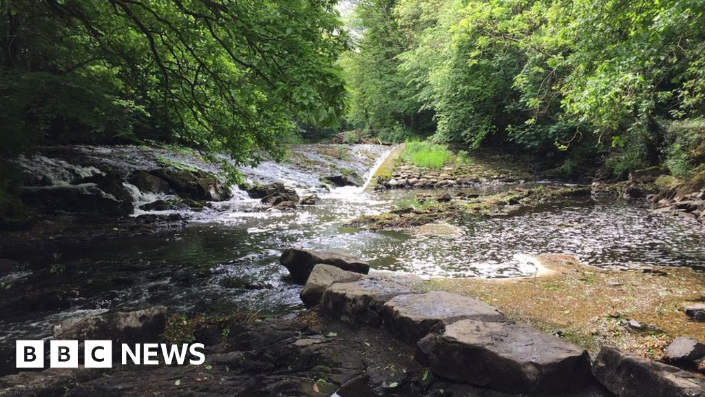 Call for environmental help in Covid recovery plan