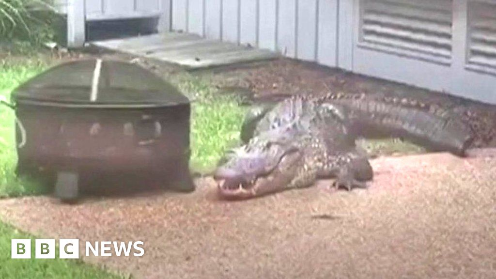 'Angry' alligator visits US family's home thumbnail