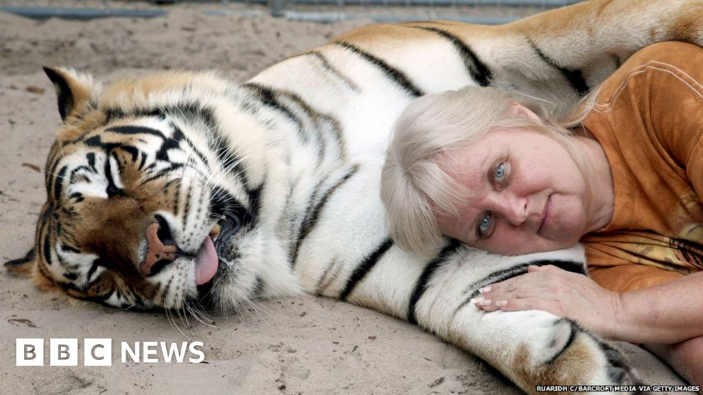 Does the US have a pet tiger problem? - BBC News