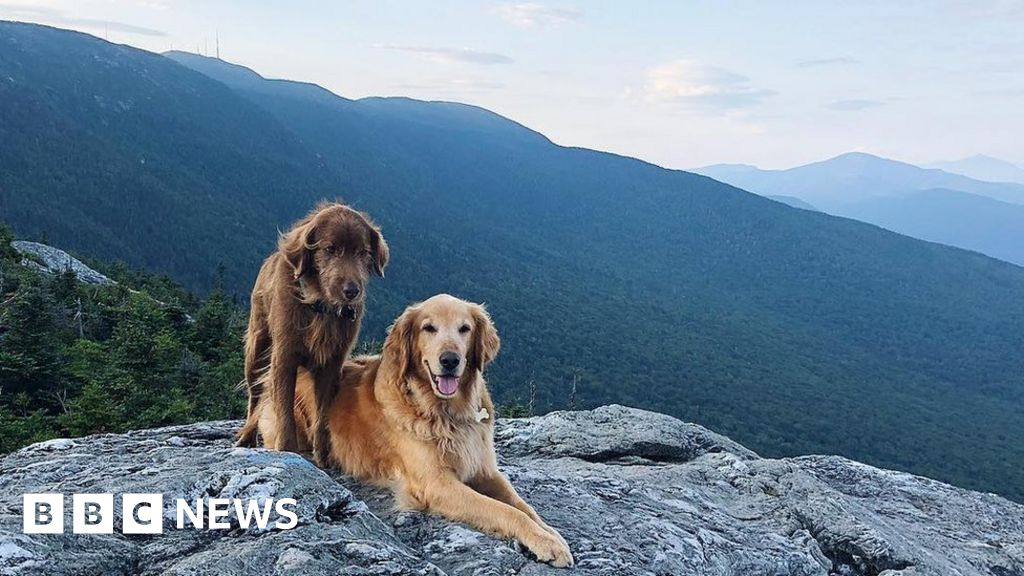 Bucket List For Dog Dying Of Cancer
