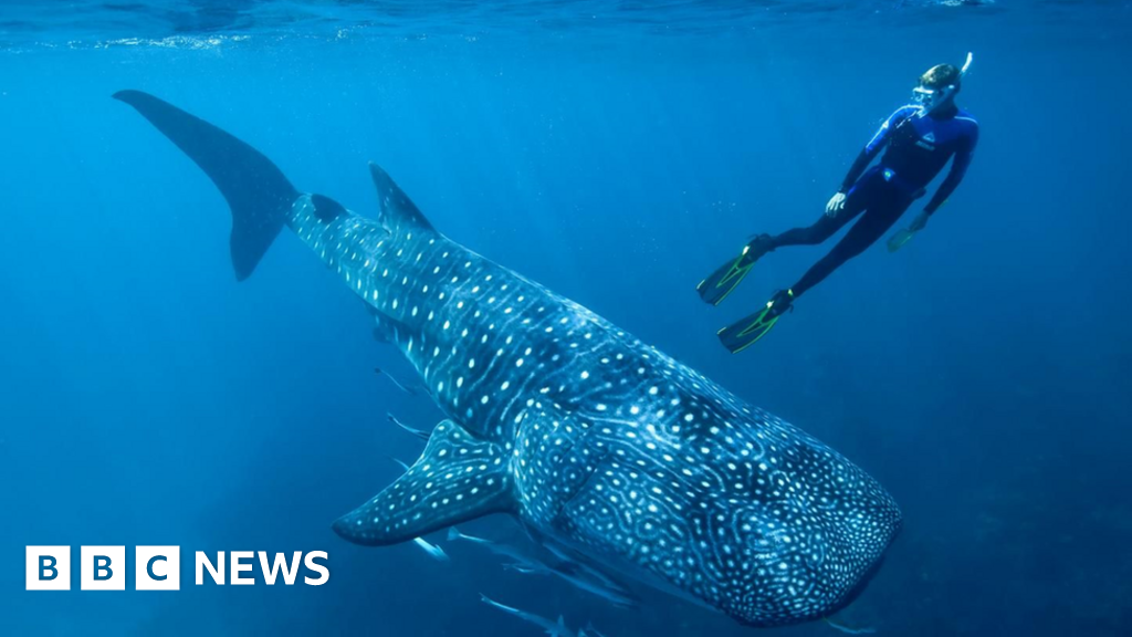 Bomb tests reveal true age of world's largest fish