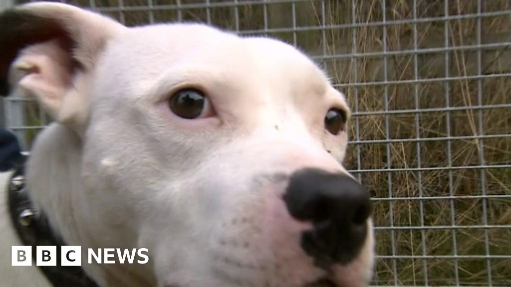 Happier new year for abandoned dog