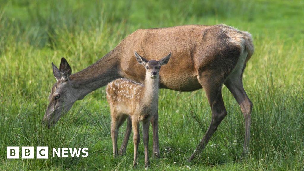 Climate change alters Highland red deer gene pool