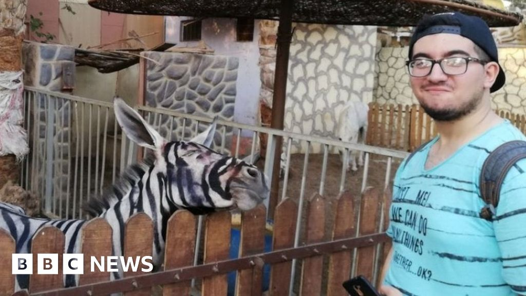Egypt zoo accused of painting donkey to look like a zebra – BBC News
