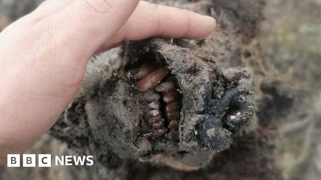 Bear from Ice Age found 'completely preserved' in Russian Arctic