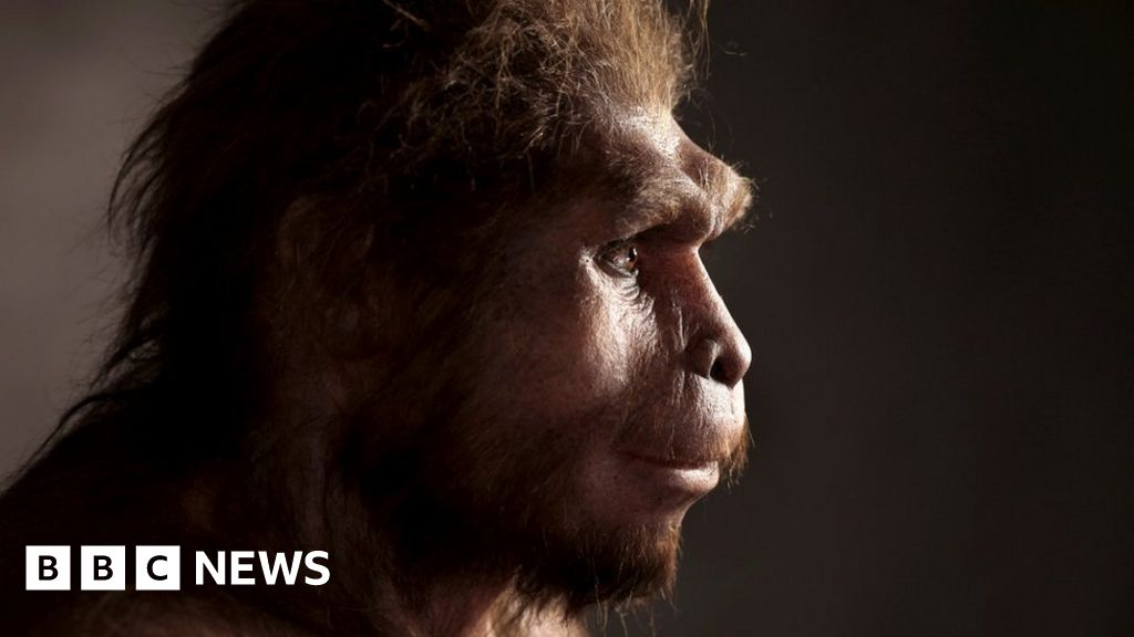 Homo erectus: Ancient humans survived longer than we thought - BBC ...