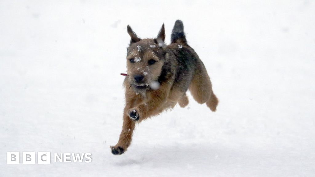 Snow in the UK: Wintry weather in pictures