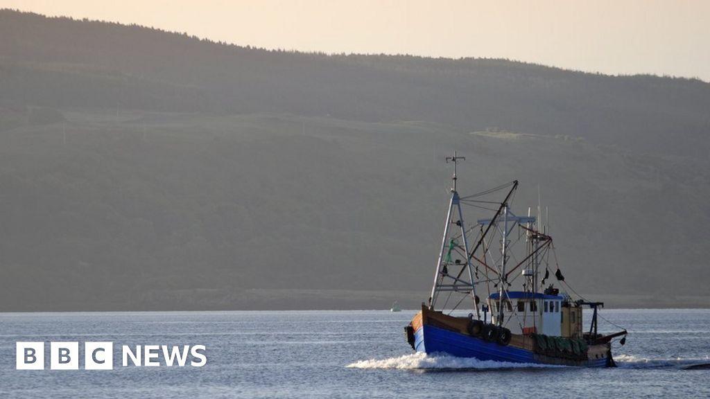 Plenty more fish in the brexit sea bbc news for More fish in the sea