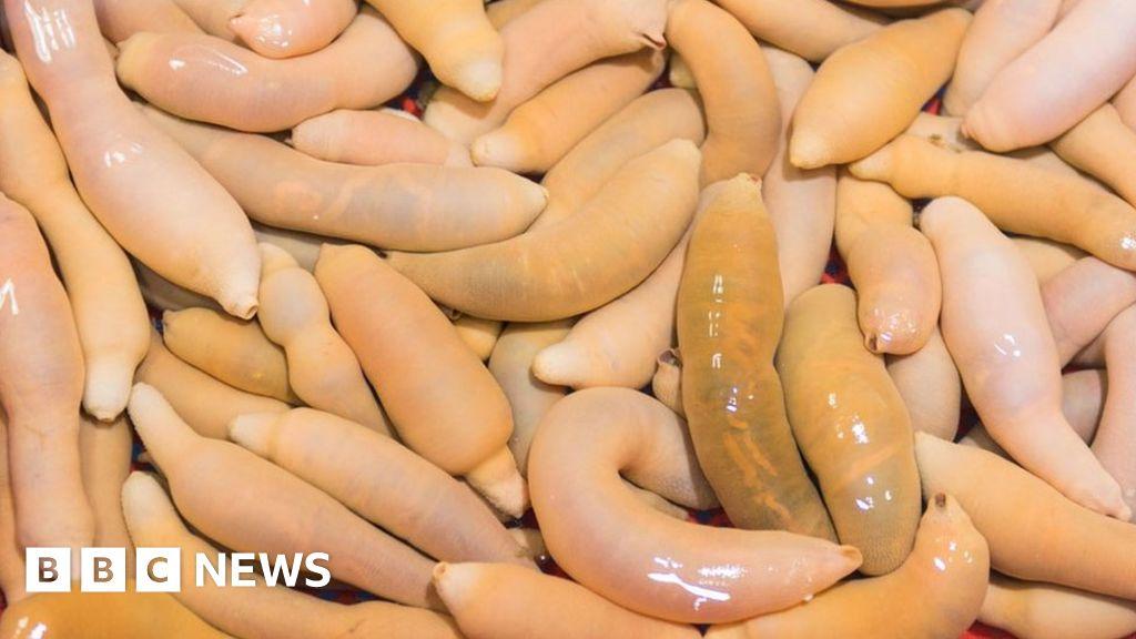 'Penis fish' wash up in California