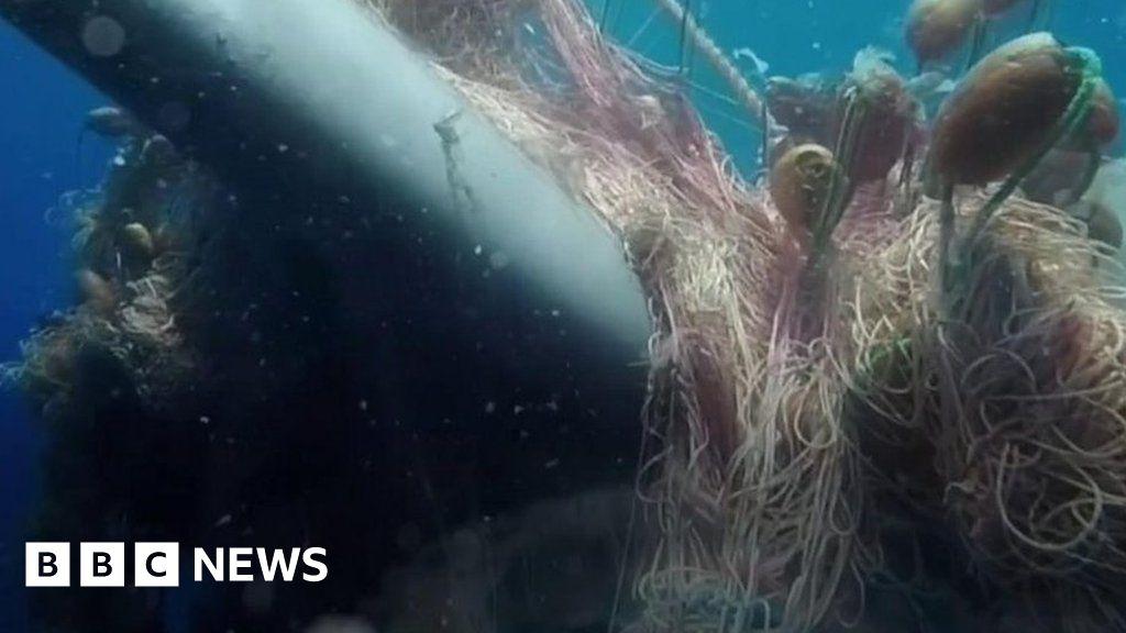 Whale free of fishing web off Italian coast thumbnail