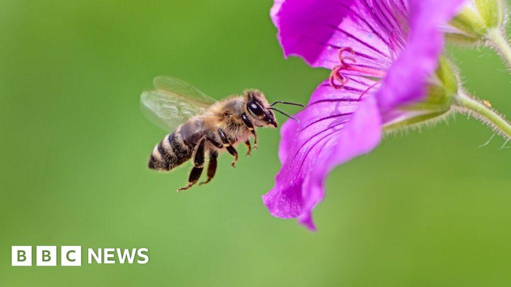 A bee C: scientists translate honey bee Queen duets