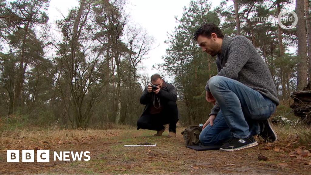 Wolves move into Dutch national park