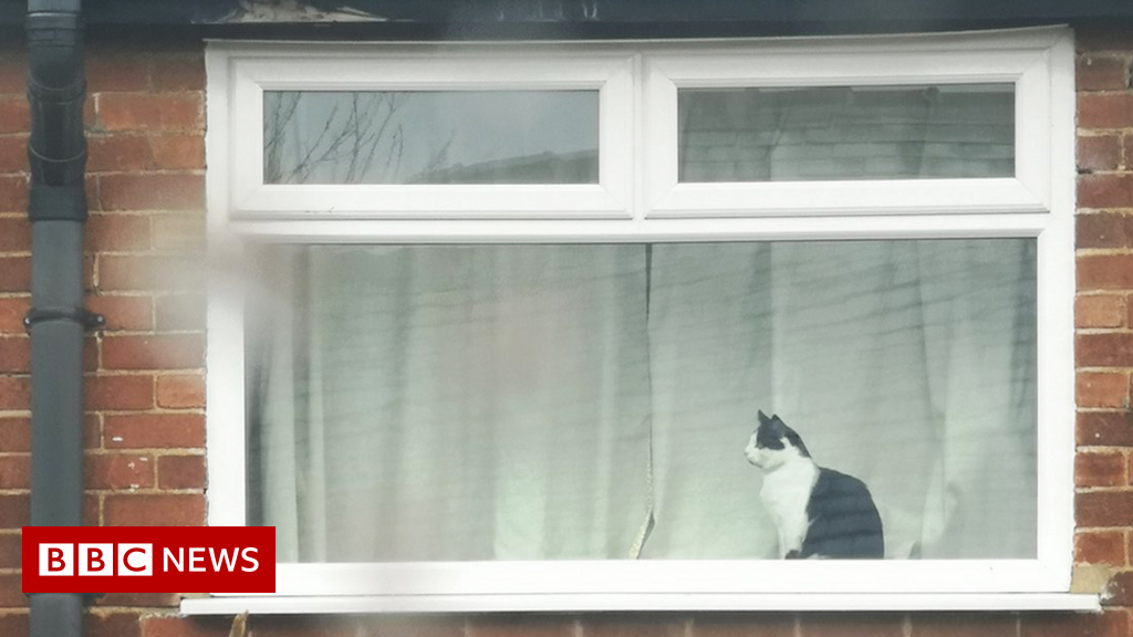 Neighbour used message in window to ask cat's name