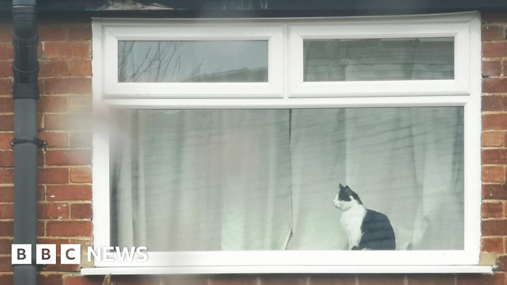 Coronavirus: Leeds woman put message in window to ask cat's name
