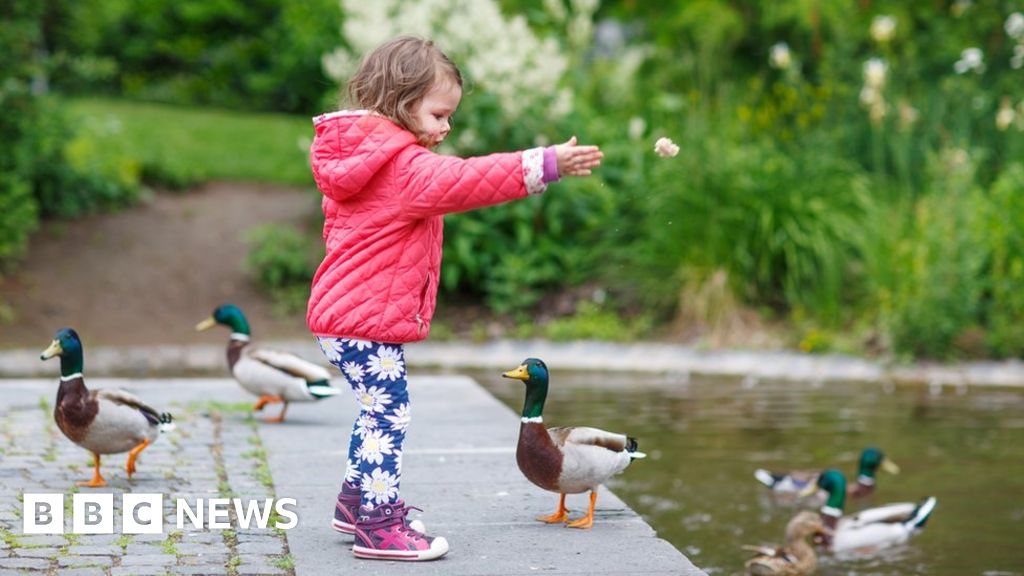 Feeding Ducks Bread Viral Sign Sparks Anger And Confusion Bbc News