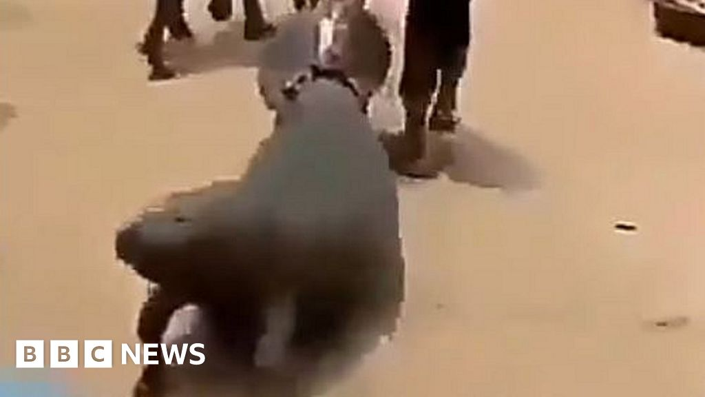 Video of manatee dragged on road sparks outrage