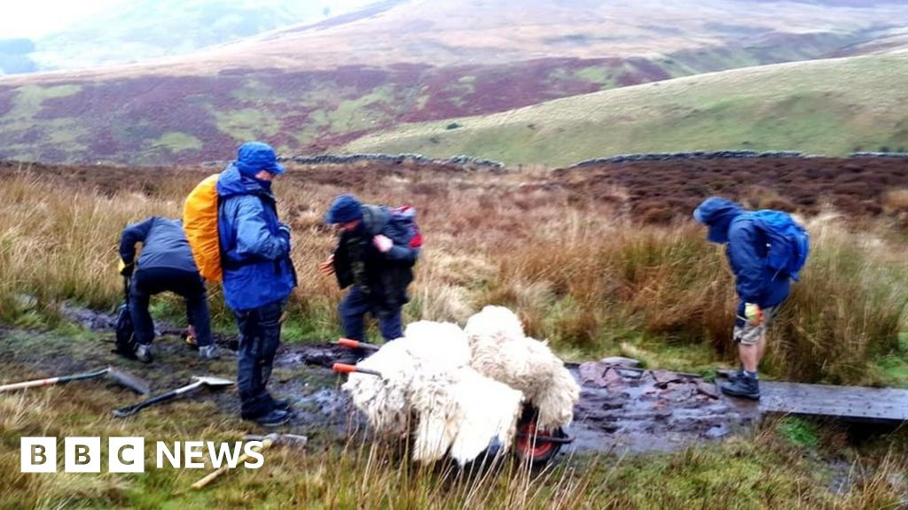 Sheep fleeces used to make  floating path  in the Pentland Hills - BBC News 333300cfefdb7