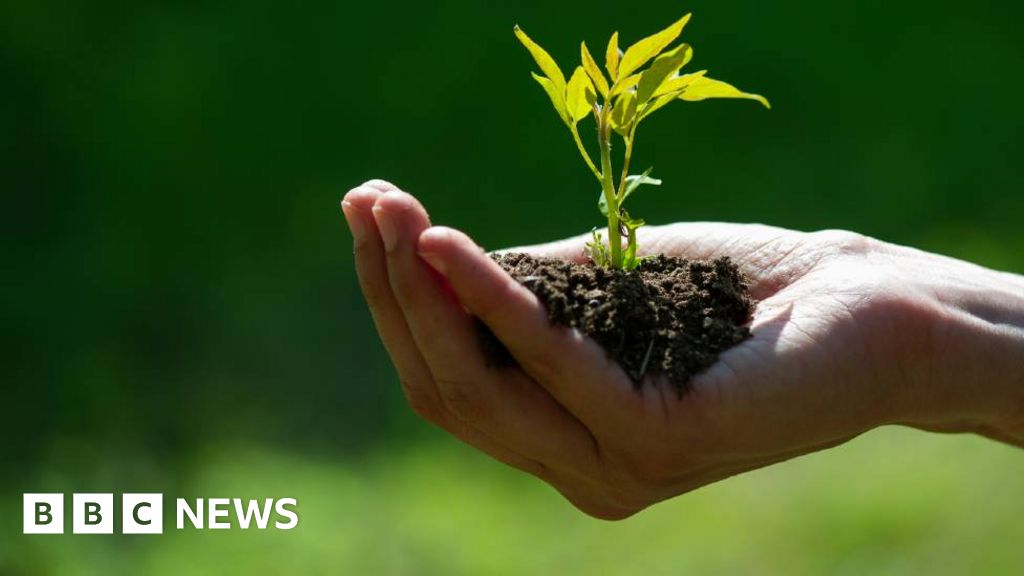 Coronavirus doctor's diary: How gardening could help in the fight against obesity