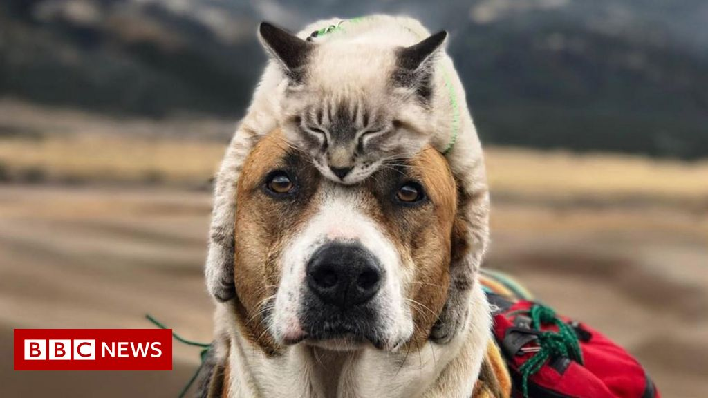 43f9d971 Henry and Baloo: Dog and cat travel companions gain cult following ...