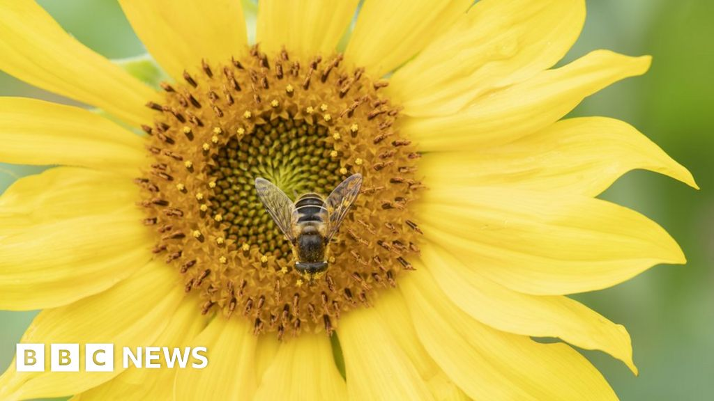 In pictures: Blooming Britain thumbnail