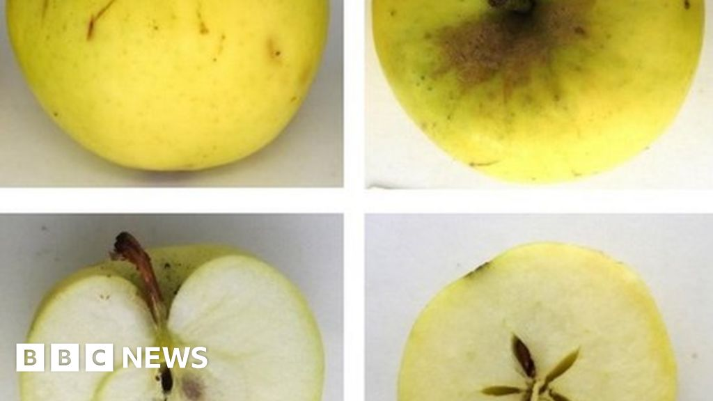 'New' apple and pear varieties found