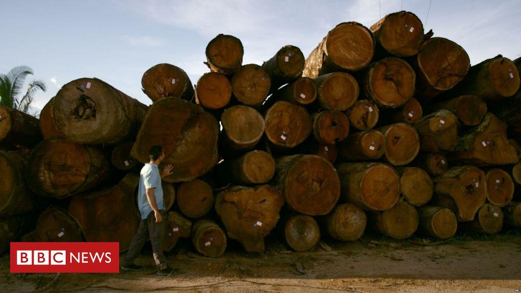 MPF vai apurar venda ilegal de terras na Amazônia via Facebook revelada pela BBC