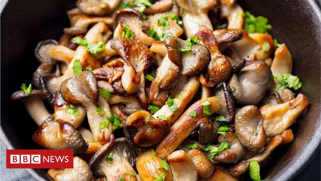 Comer cogumelos duas vezes por semana reduz risco de perda de memória,  sugere estudo - BBC News Brasil