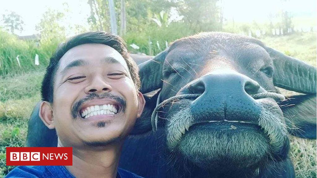 Tem Na Web - O agricultor tailandês que viralizou na internet graças às selfies com seu amigo búfalo
