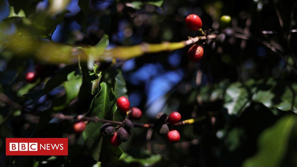 Como uso de agrotóxicos sem orientação e proteção põe agricultores brasileiros em risco