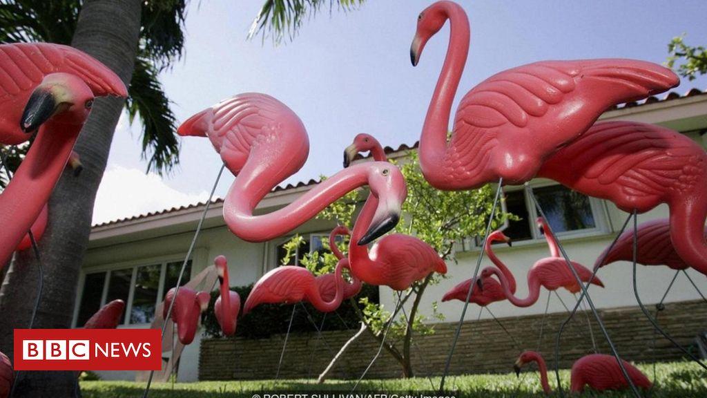 A história por trás do flamingo de plástico rosa, um estranho símbolo kitsch do otimismo americano - BBC News Brasil