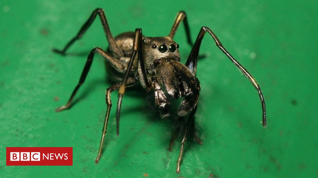 Tem Na Web - A curiosa aranha que amamenta seus filhotes