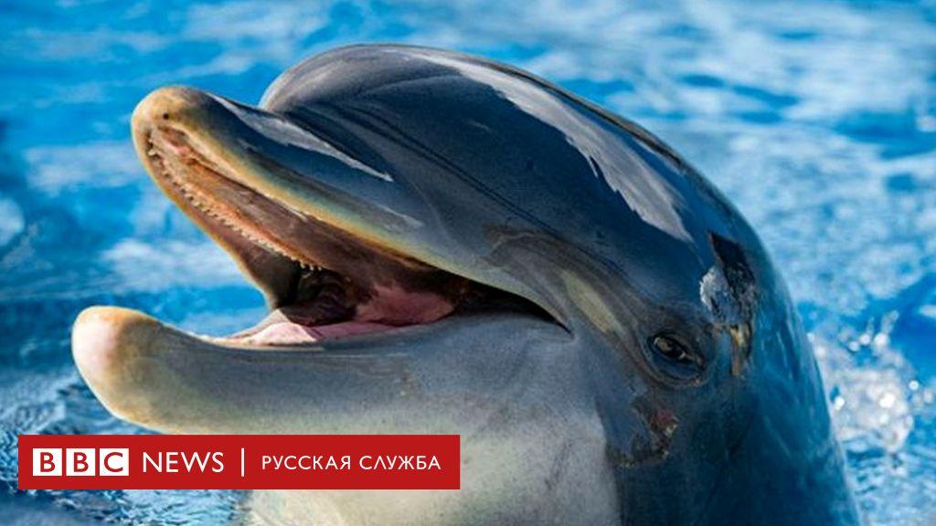 Дельфины гомосексуальны
