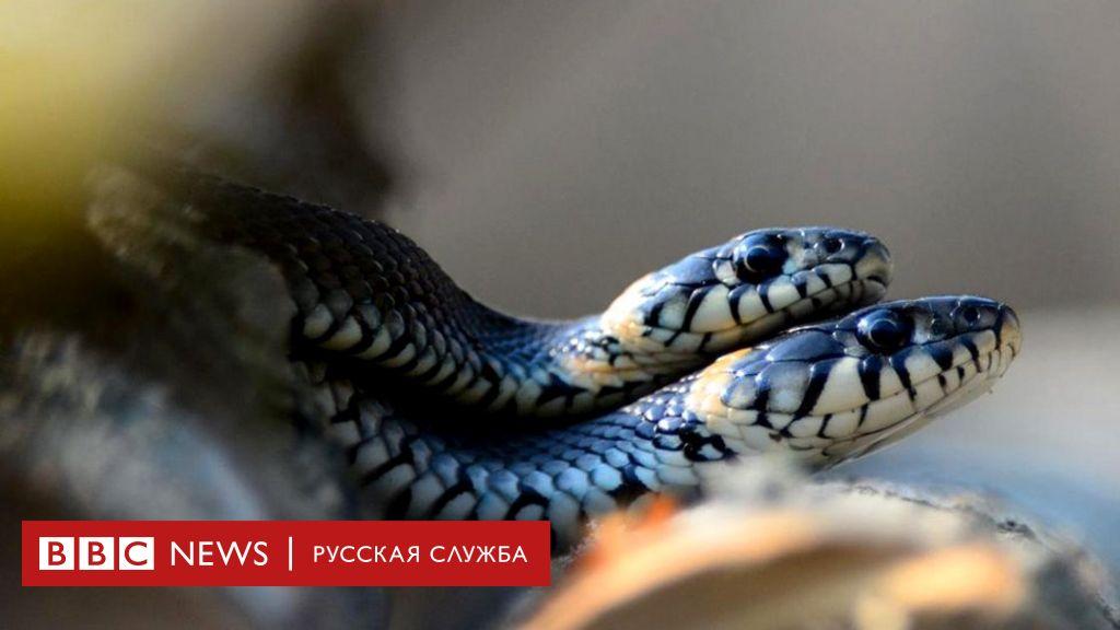 kak-proishodit-polovoy-akt-v-foto-otdih-na-dosug-intim-moskva-zrelie
