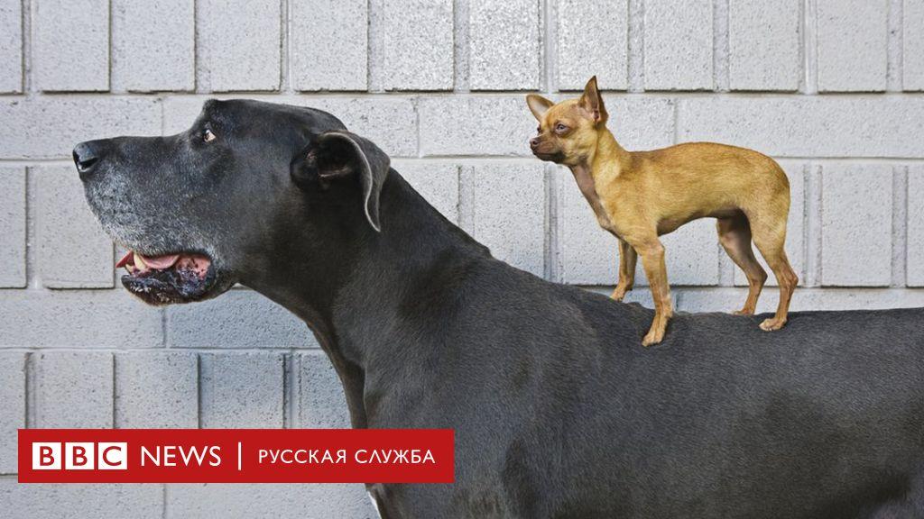 Собака - не просто друг человека. Ученые установили, что ...
