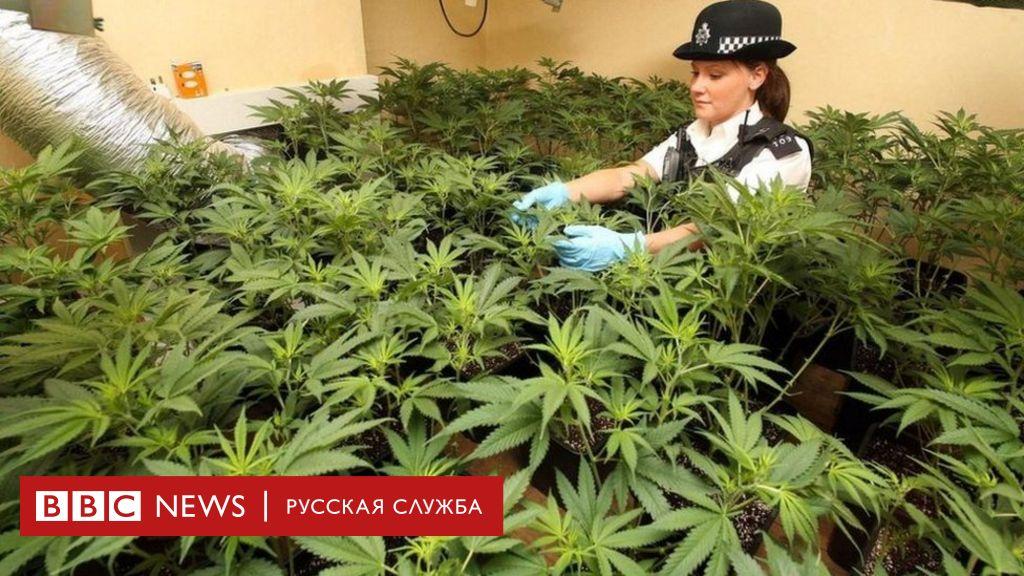 Как действуют наркотики марихуана на русском марихуана как действует на давление