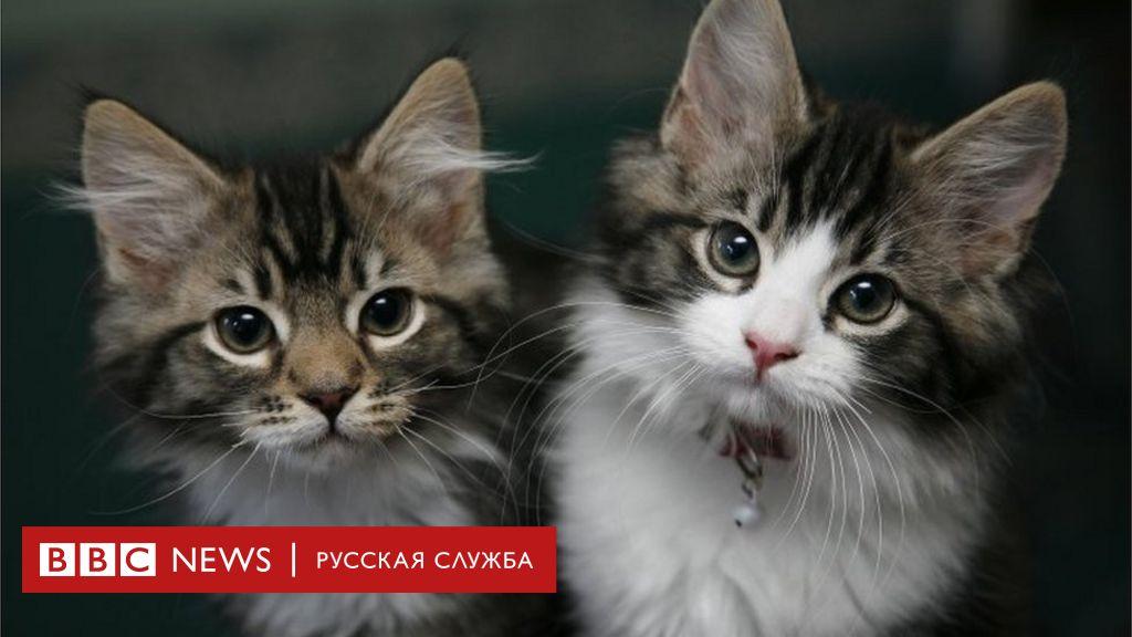 коронавирус у котенка 4 месяца