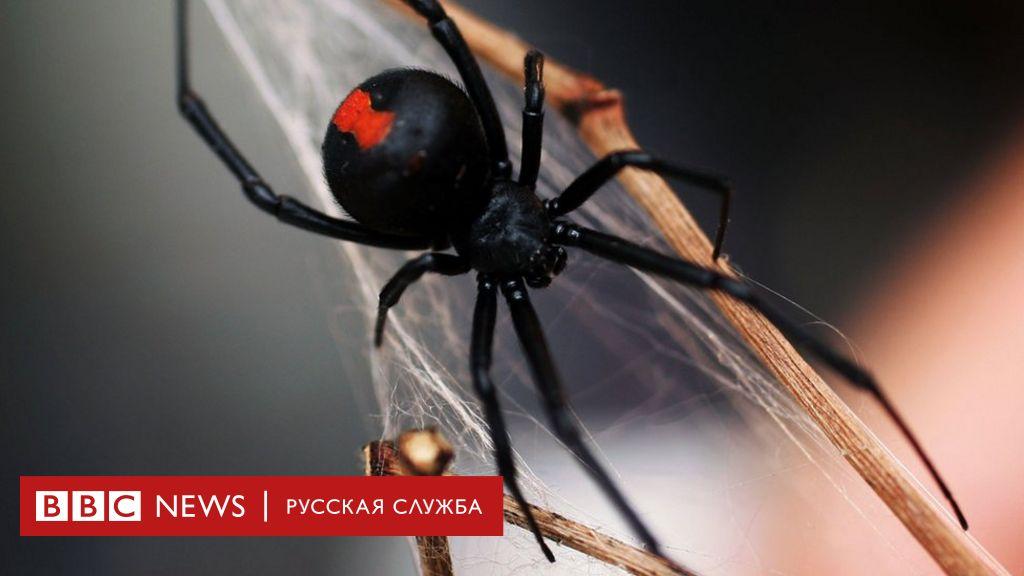 Пенис человека паука